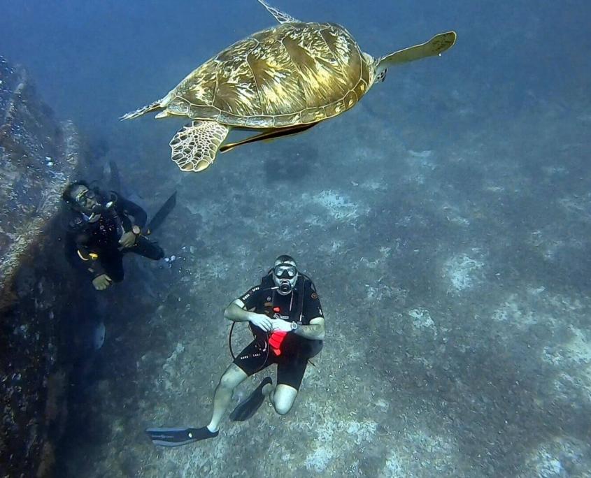 buceando-con-tortuga-en-Bali