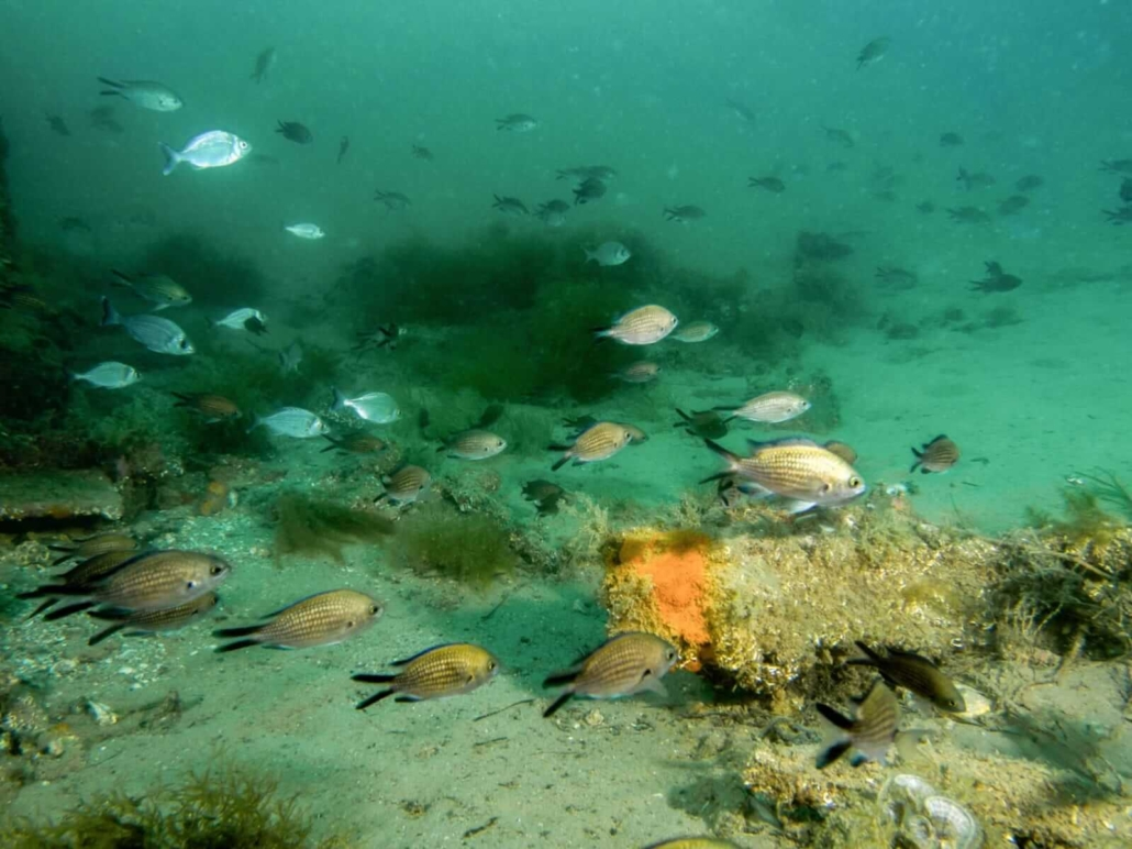 Buceando en Tarragona en el Fondo del Mar
