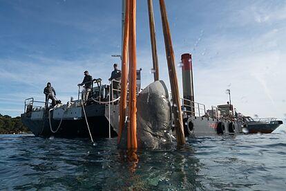 Bajando-la-escultura-submarina
