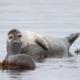 Bucear-como-nutrias-y-focas