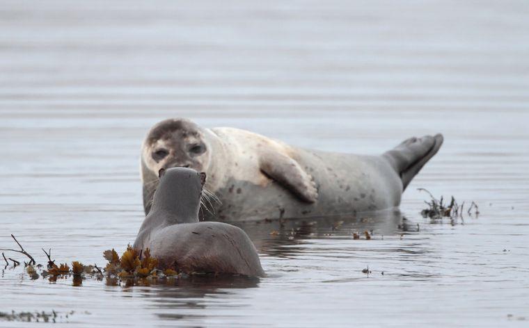 Bucear-como-focas-y-nutrias